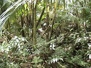 rain forest vegetation
